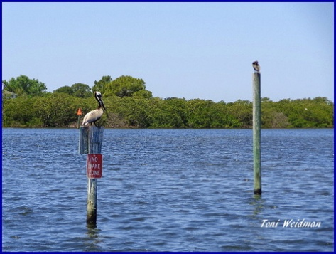 Florida Sunshine, Water And Pelican